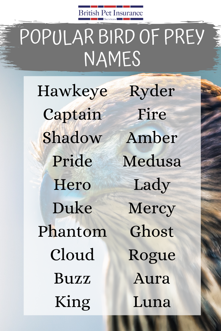 Choosing A Name For Your Pet Bird Is Just As Difficult As Choosing