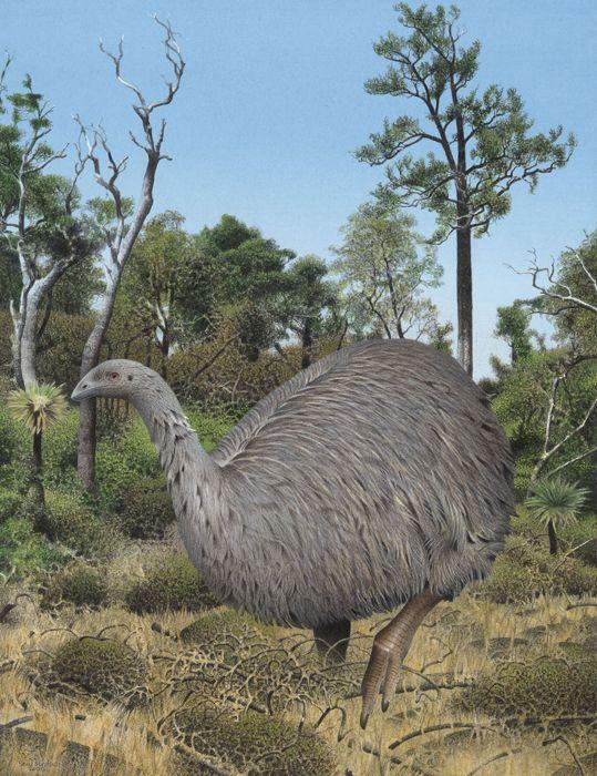 New Zealands Biggest Bird Gone Extinct History Dino Tijd