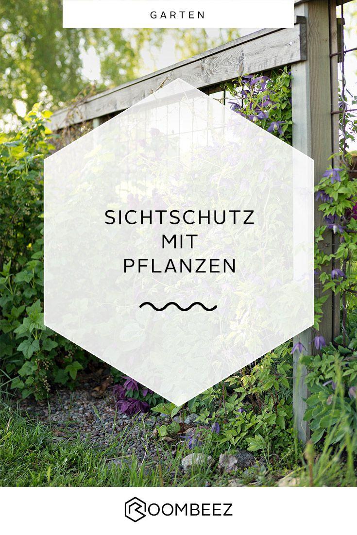 Sichtschutz Mit Pflanzen Balkon Terrasse Garten Sichtschutz