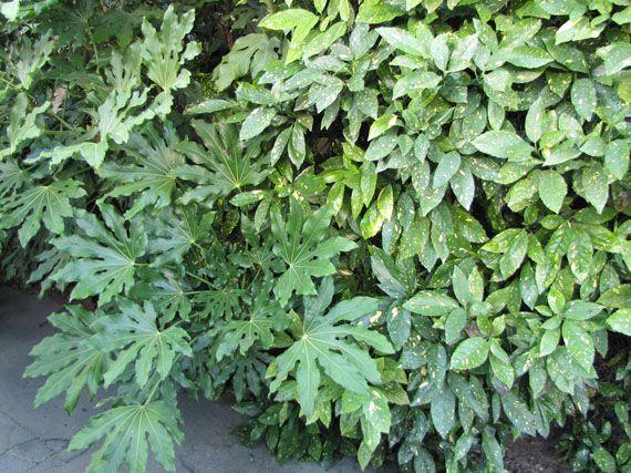 Plantas que aman la sombra plantas pinterest la - Plantas exterior sombra ...