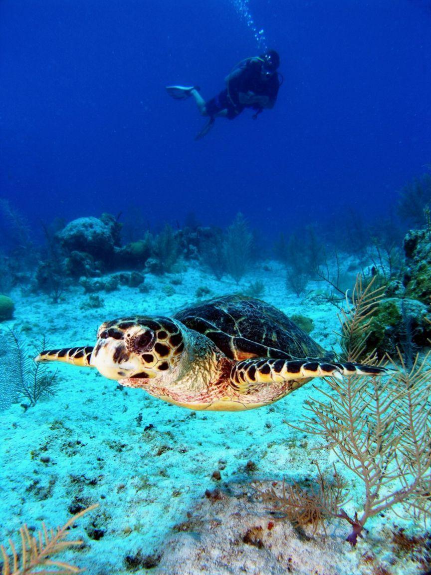 Dive Grand Cayman Islands