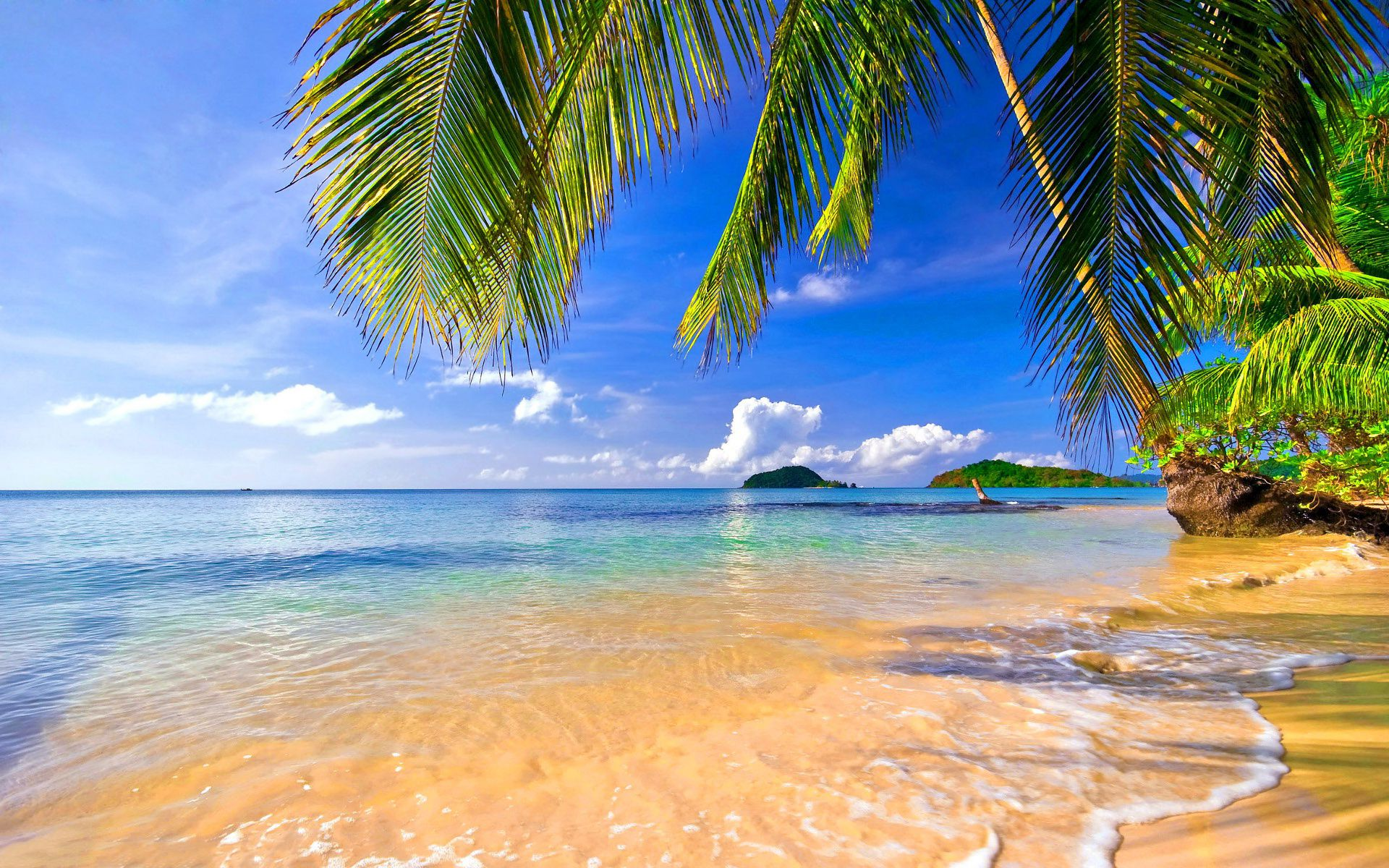 tropical wallpaper desktop jnsrmgksb ijournal | wallpapers for