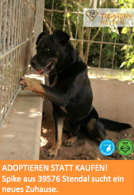 Schon viel zu lange sitzt Spike im Tierheim Stendal. http