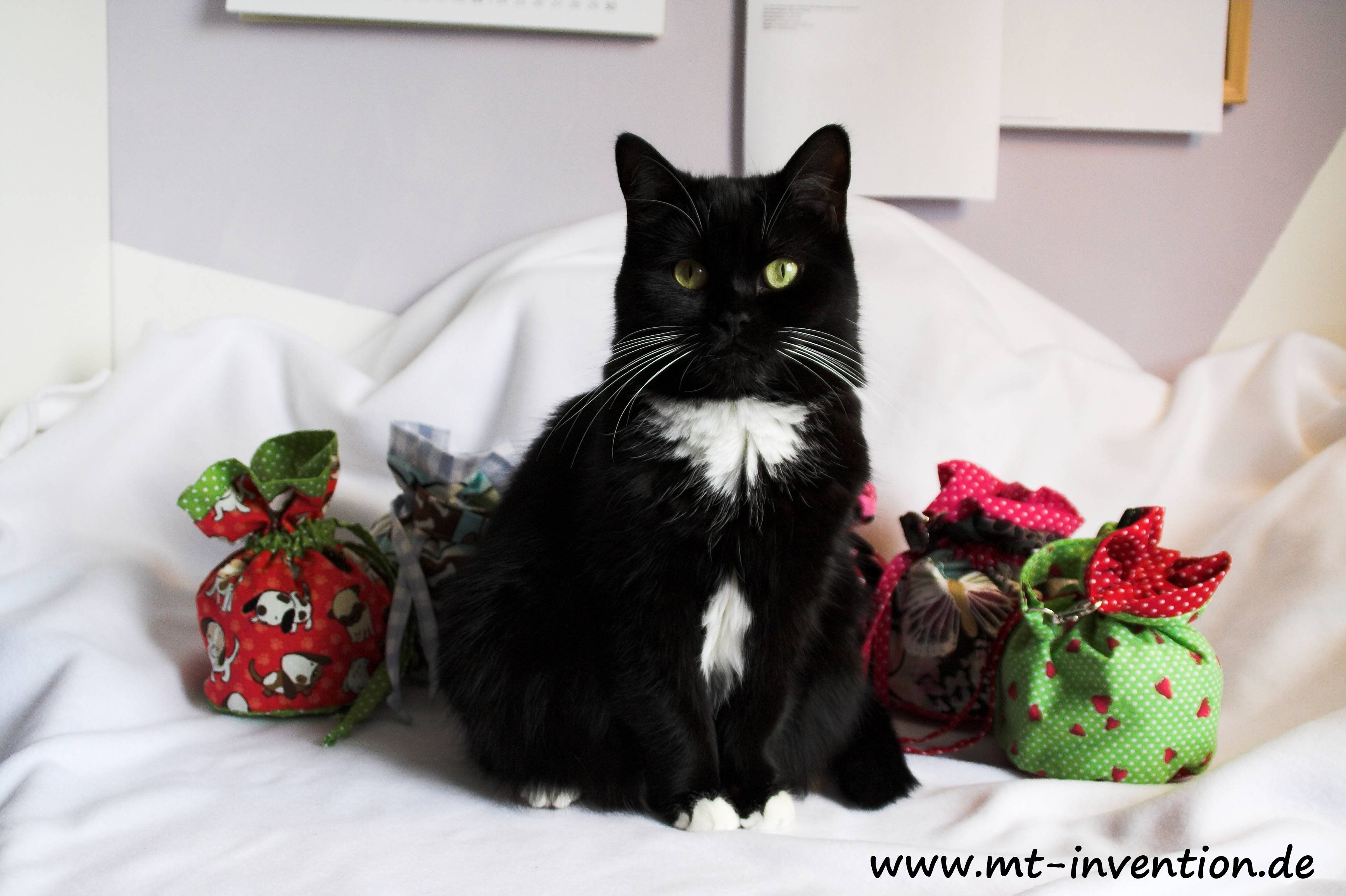 Mausi the cat
