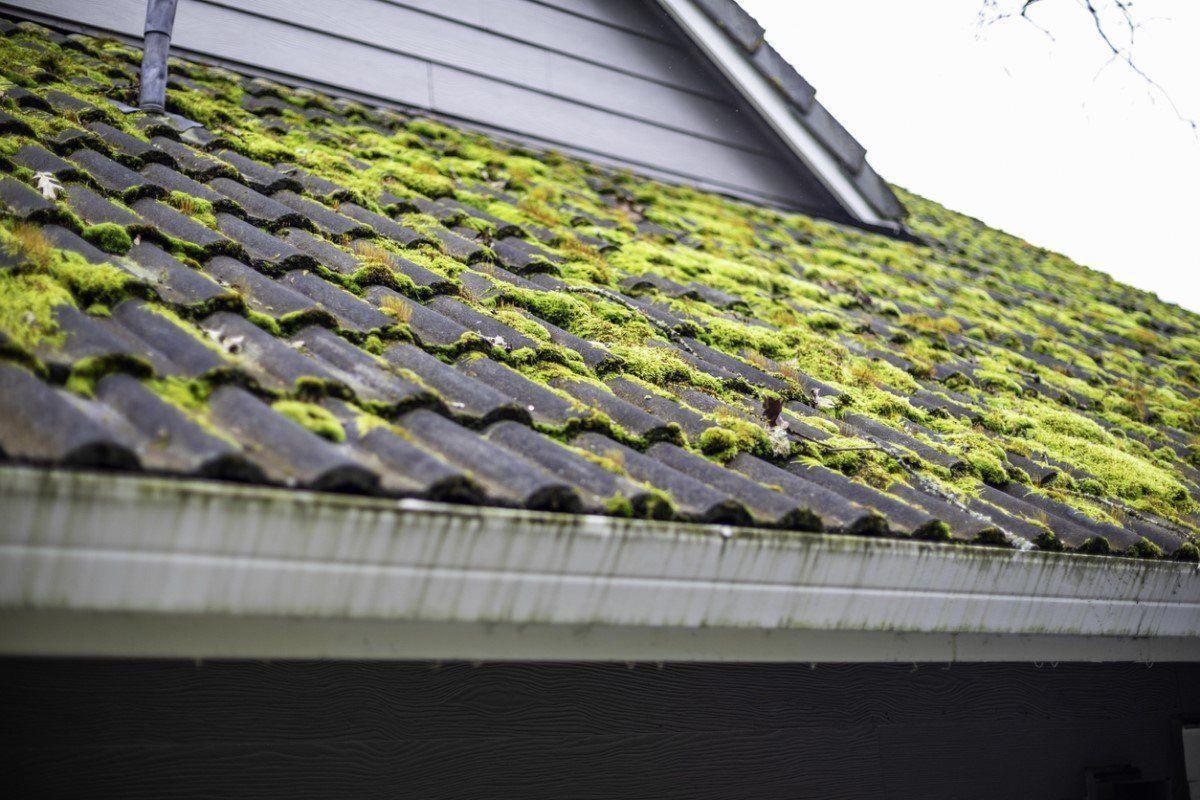 Pristine Roof Tools Rooftools In 2020 Asphalt Roof Shingles Roof Shingles Concrete Roof Tiles
