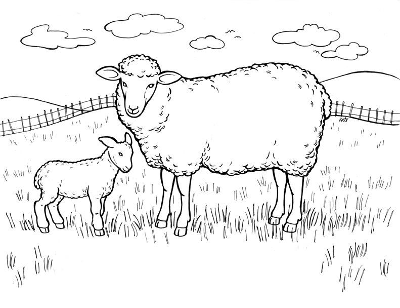 Free Printable Sheep Coloring Pages For Kids Farm Animal Coloring Pages Coloring Pages Bible Coloring Pages
