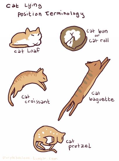 cat drawing tumblr google search
