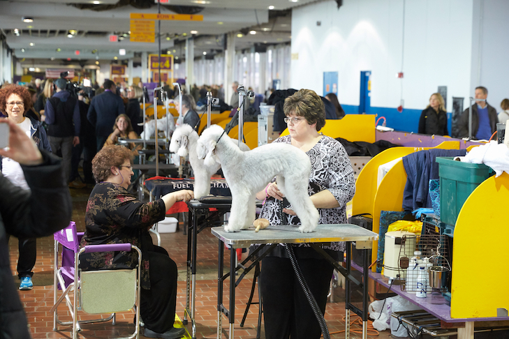 Highlights About New York Pet Fashion Show 2019 With Images