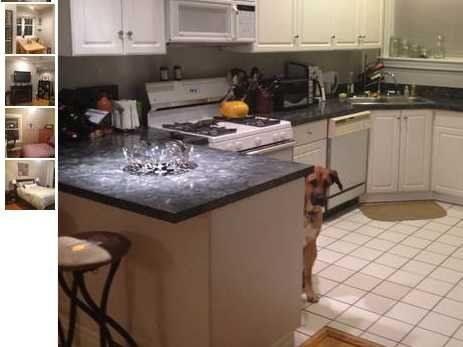 Photobombing Dog Makes For Amazing Craigslist Apartment Ad Apartment Listings Apartments For Rent Apartment