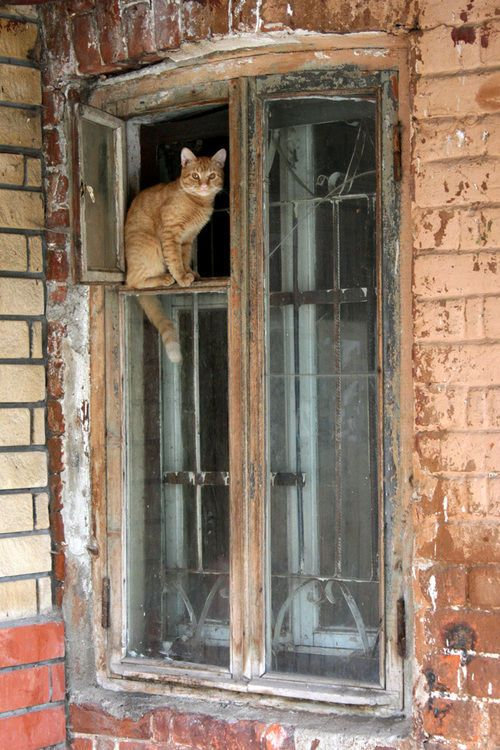 Ginger Kitty in an old window