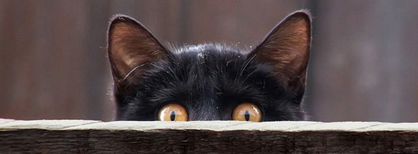 Halloween 2020 Cute Fb Covers 100 Cute Cat & Kitten Cover Photo for Facebook Timeline in 2020