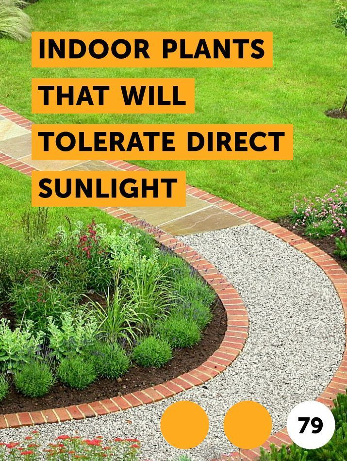 Indoor Plants That Will Tolerate Direct Sunlight Plants 400 x 300