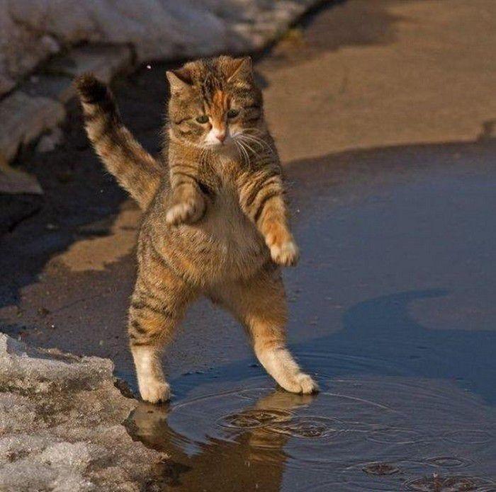 Сейчас я тебе задам !   Baby Beauty   Cats, Dancing cat