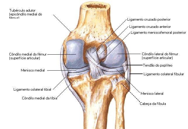 Por Francisco Menezes Www Aula De Anatomia Anatomia Do Joelho