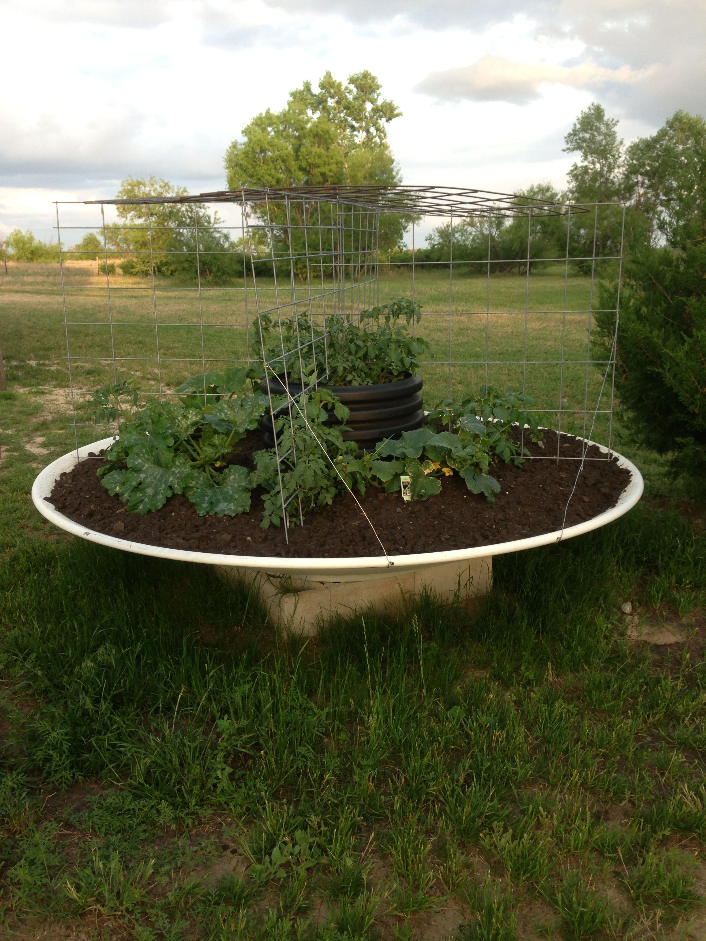My Satellite Dish Garden A Great Re Purposing Idea And It S Not