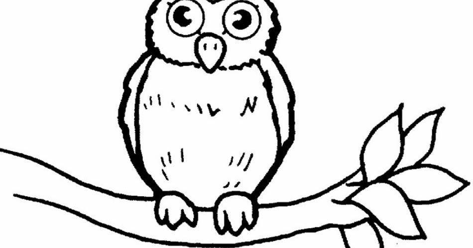 Paling Populer 20 Gambar Burung Hantu Untuk Kolase Semoga Kumpulan Gambar Sketsa Dapa Menghibur Anda Semua Untuk Tempurung Burung Hantu Sketsa Gambar Burung