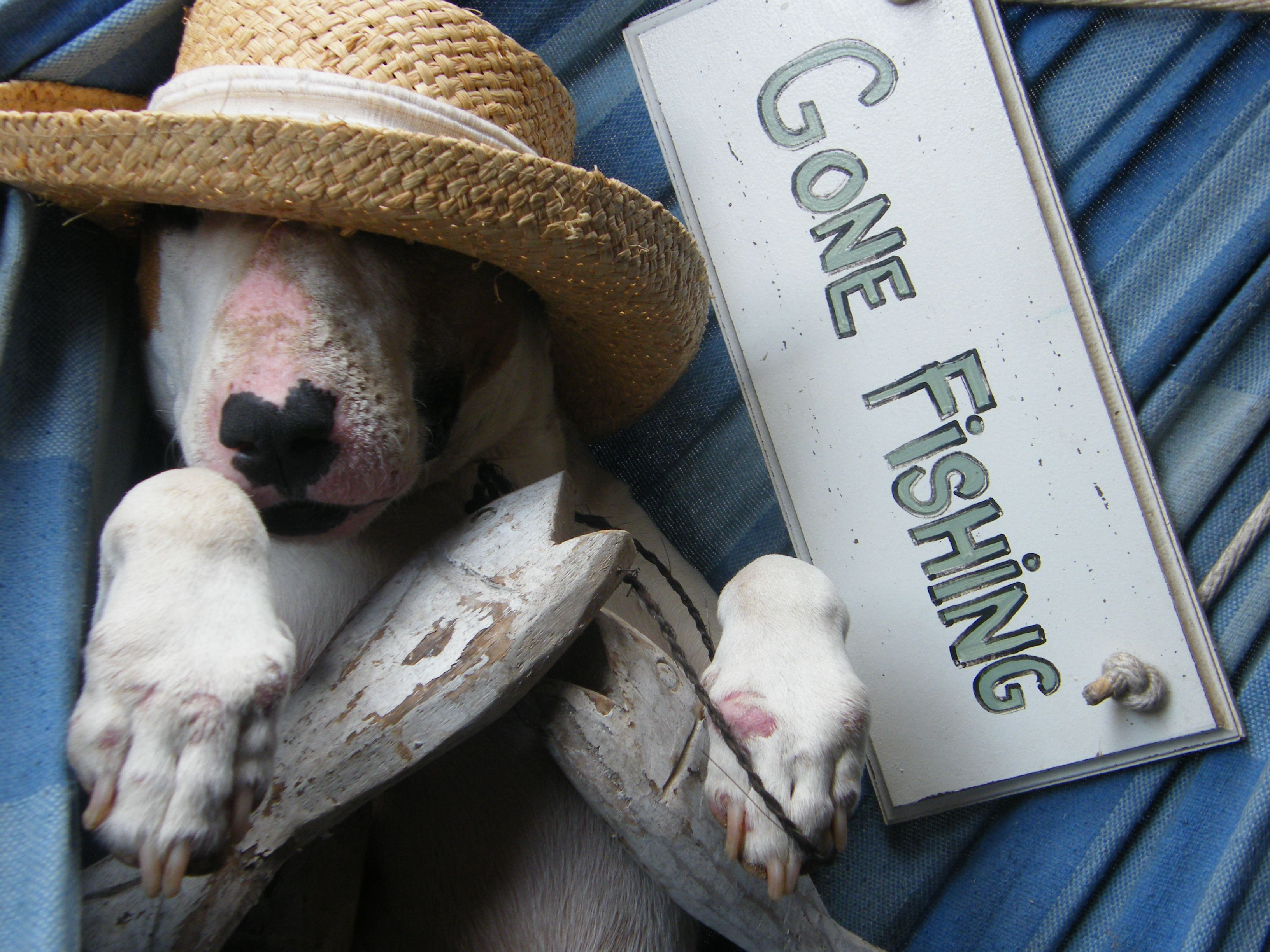 Gone #Fishing #bull #terrier