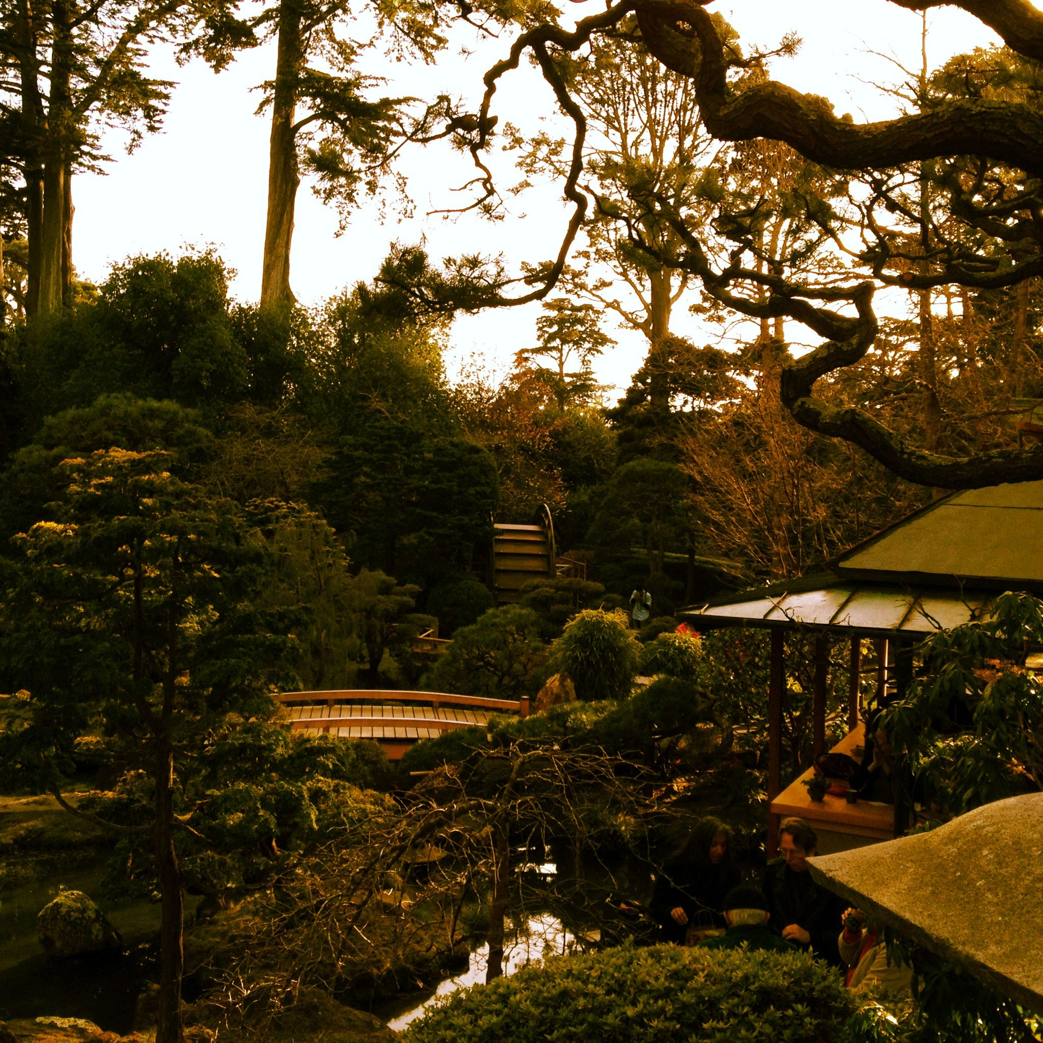 The Japanese Tea Garden in San Francisco\'s Golden Gate park. | The ...