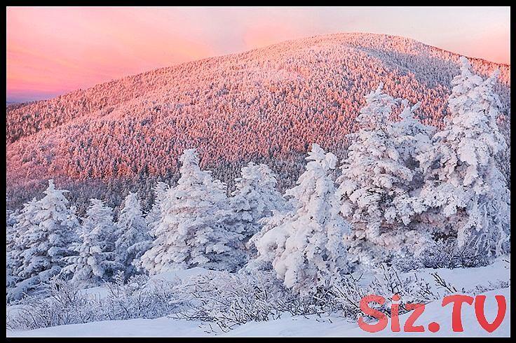 Snowy Trees Sonnenaufgang, Roan Highlands, NC – Landschaftsfotografie Fine Art Print – Pink, …