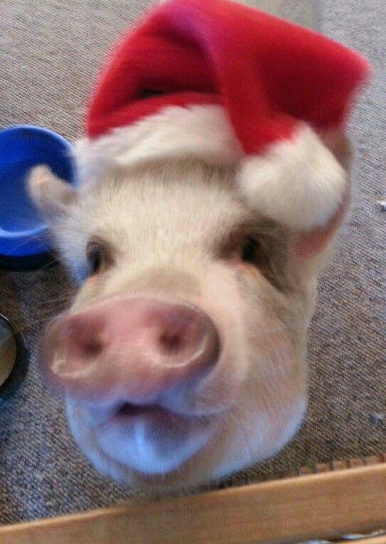 We need a little Christmas Cheer !