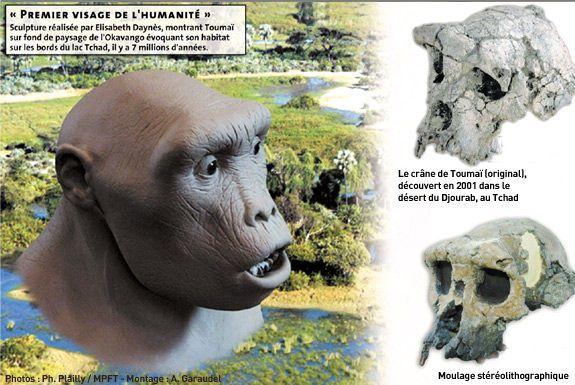 Toumai Le Premier Homme Evolution Humaine Les Premiers Hommes Protohistoire