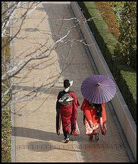Geishas with a purple umbrella