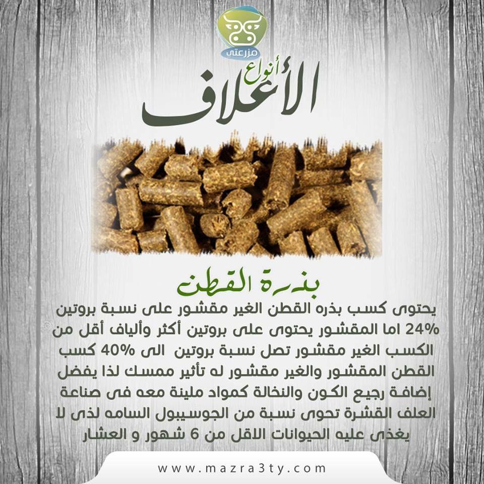 يحتوى كسب بذره القطن الغير مقشور على نسبة بروتين 24 اما المقشور يحتوى على بروتين أكثر وألياف أقل من الكسب الغير مقشور تصل نسبة بروتين الى 40 Food Bread Matzo