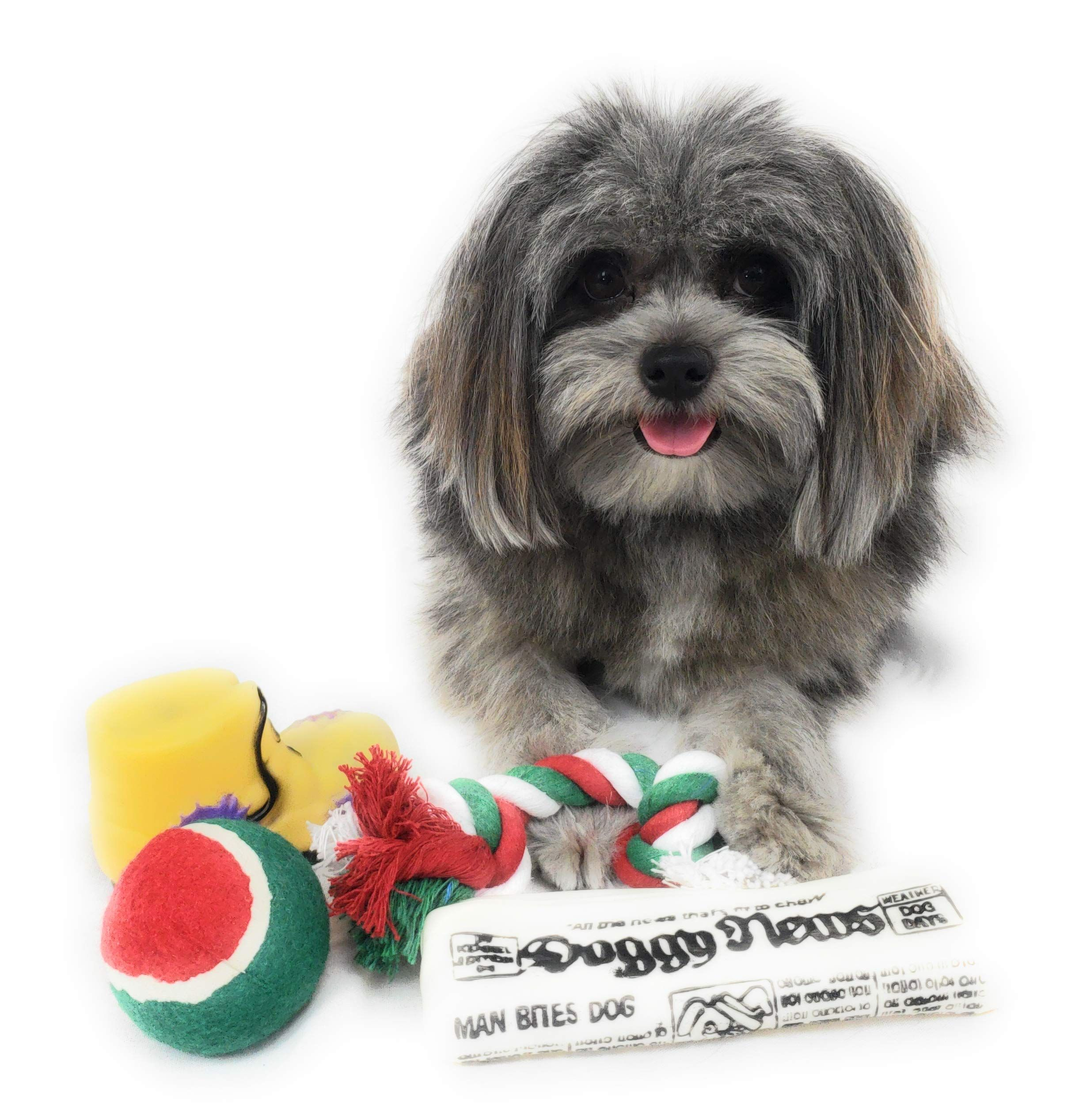 Christmas Stocking For Dogs Pack Of Squeaky Newspaper Toy Squeaky