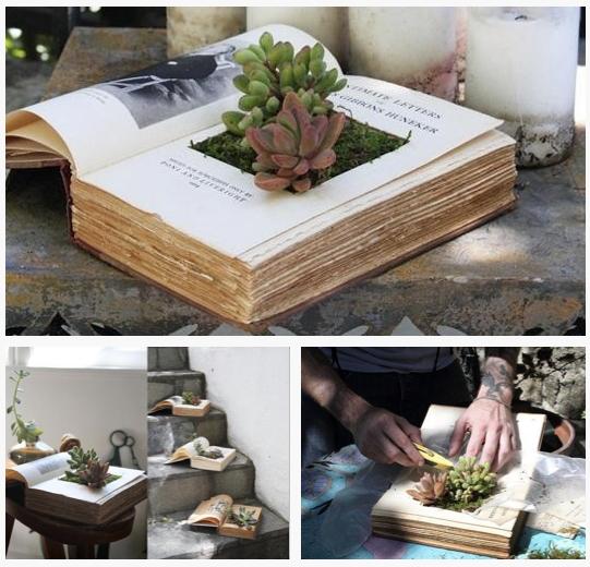 Increible combinación, libros y plantas ;) | Plantas en maceta ...