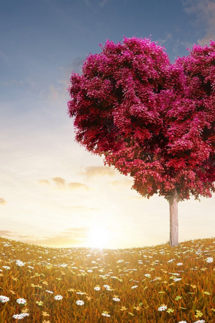 Download Free Hd Wallpaper From Above Link Love Tree Nature Valentine Field Pink Trees Love Wallpaper Field Wallpaper