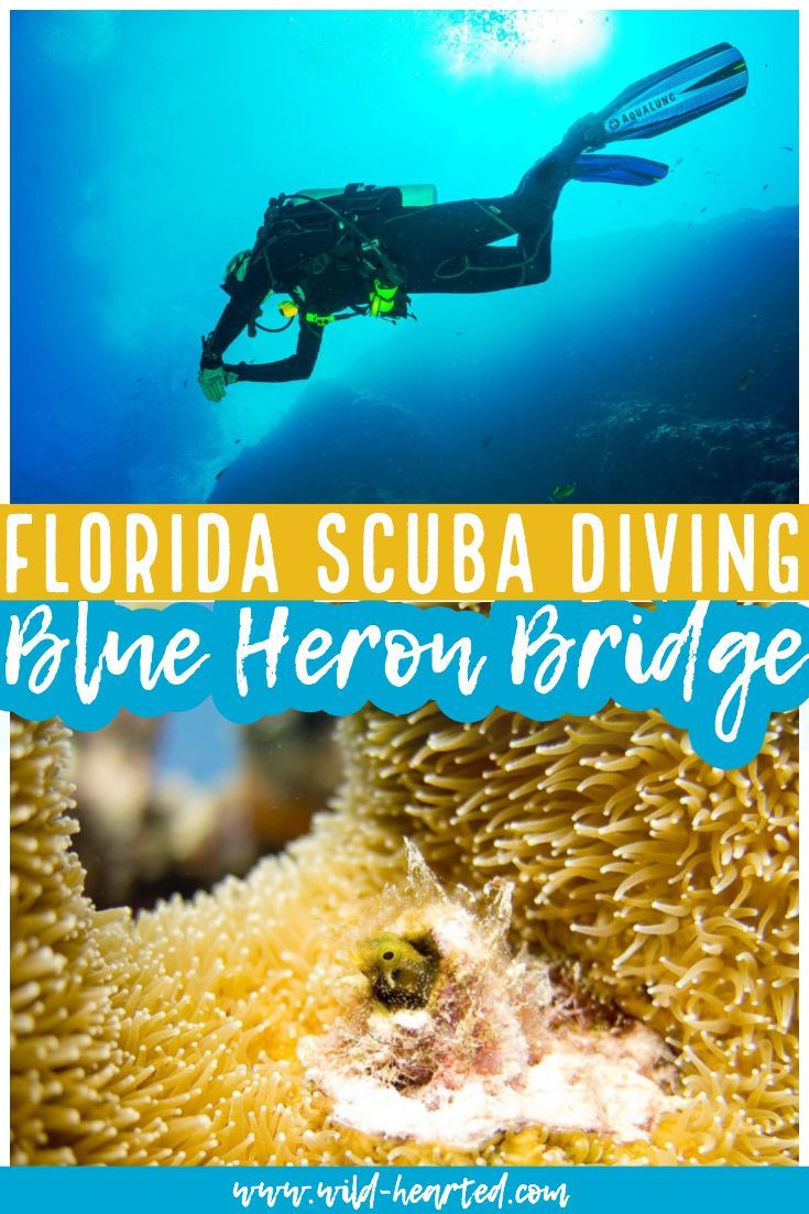 Make Sure To Dive At One Of The Best Dives In Florida