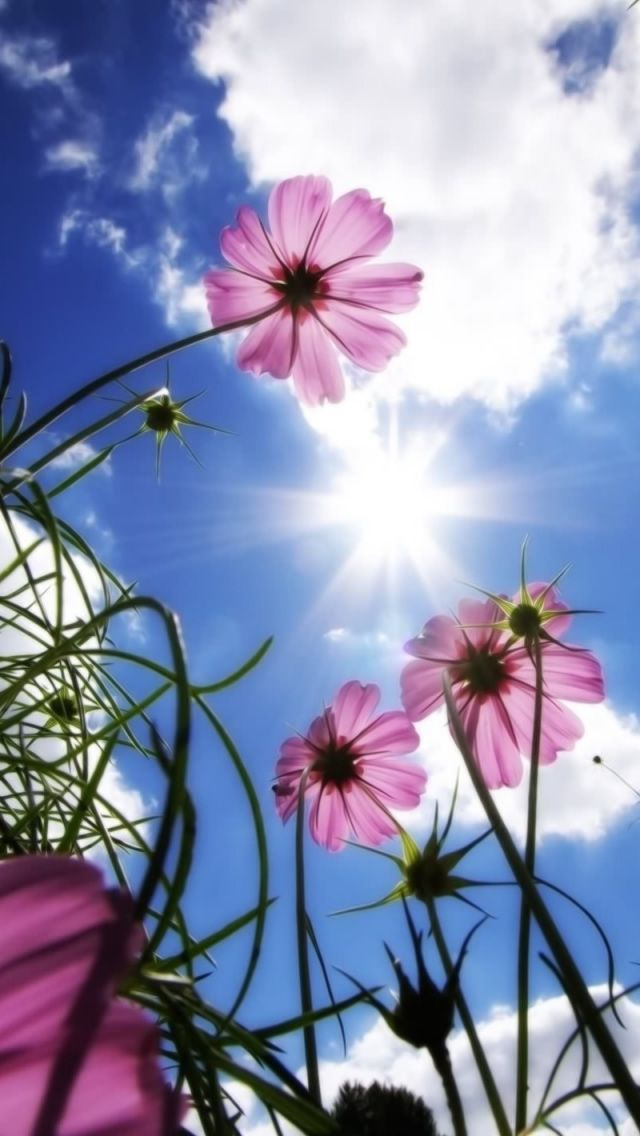 Beautiful Day Iphone 5s Wallpaper Beautiful Flowers