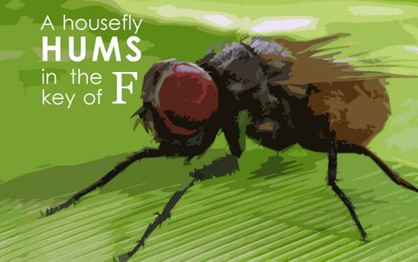 A housefly hums in the key of F.   Animal facts, Weird animals, Weird  animal facts