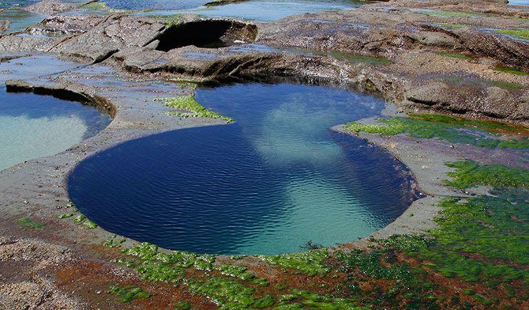 Facing North At Figure Eight Pools In Royal National Park David