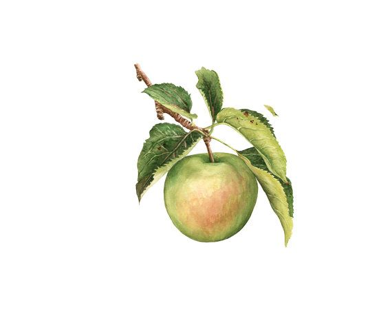 apple watercolor clip art
