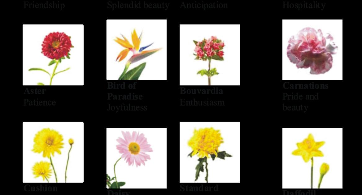 New Mildew Proof Impatiens Impatiens Flowers Container Flowers Annual Flowers