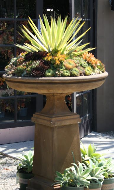 birdbath converted to a planter filled with succulents