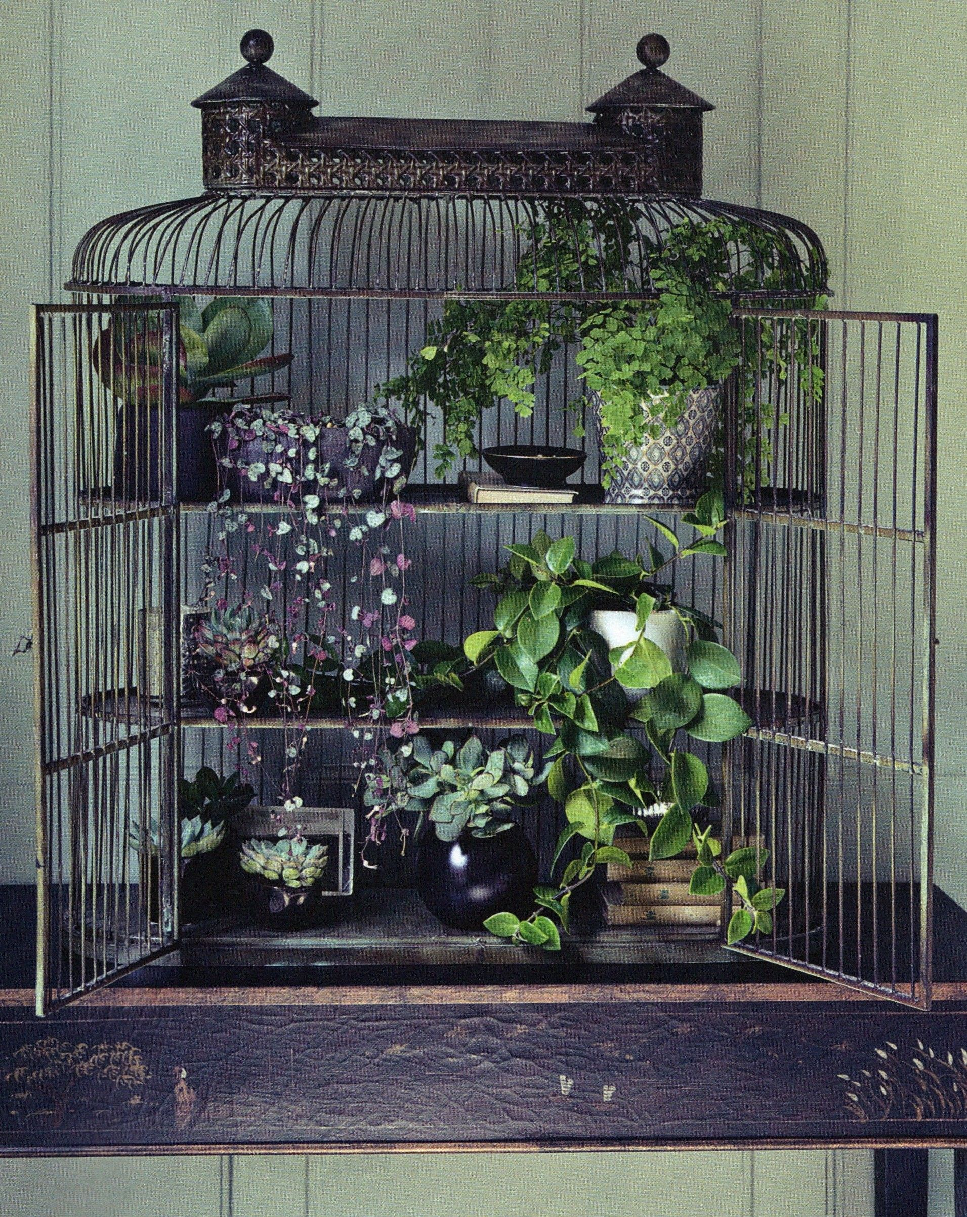 Birdcage Small Plant Display Repurposed And Beautiful Indoor Gardening Idea Plant Display