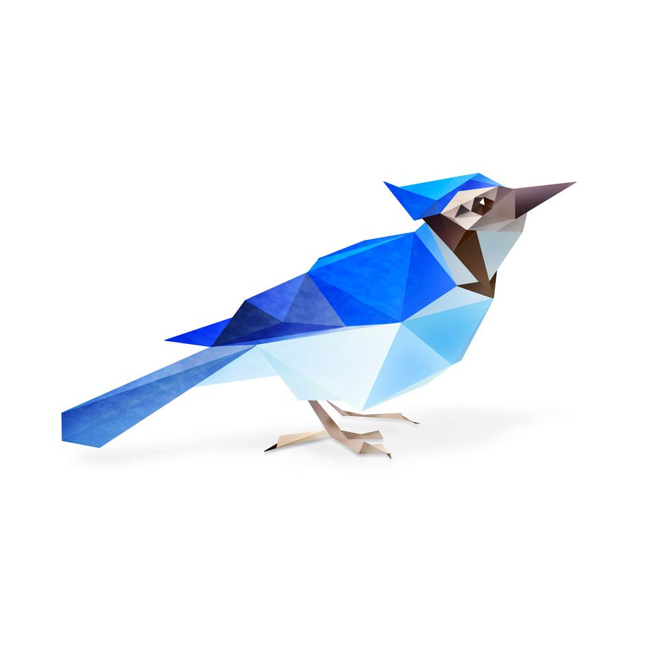 Low polygon Blue Jay, anatomy sketched, vectored in illustrator ...
