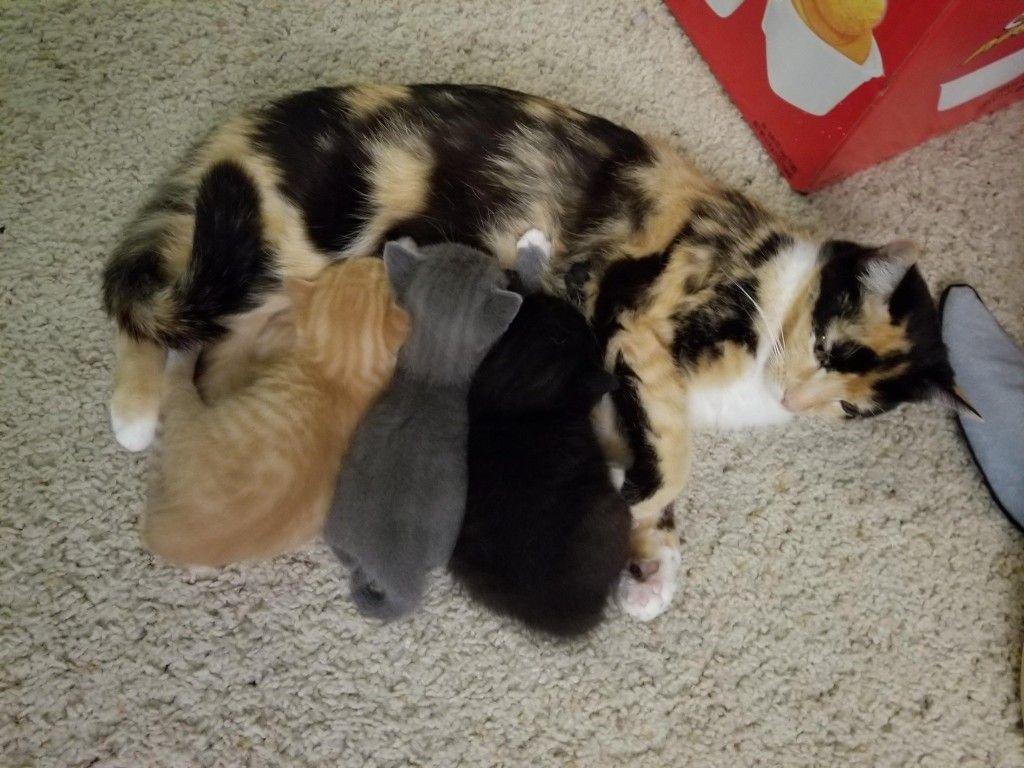 Pin by banas on SOOOOOO CUTE Kitten care, Cute