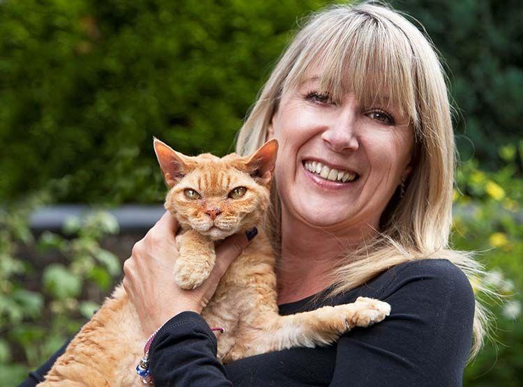 Snowshoe Kittens For Sale Oregon