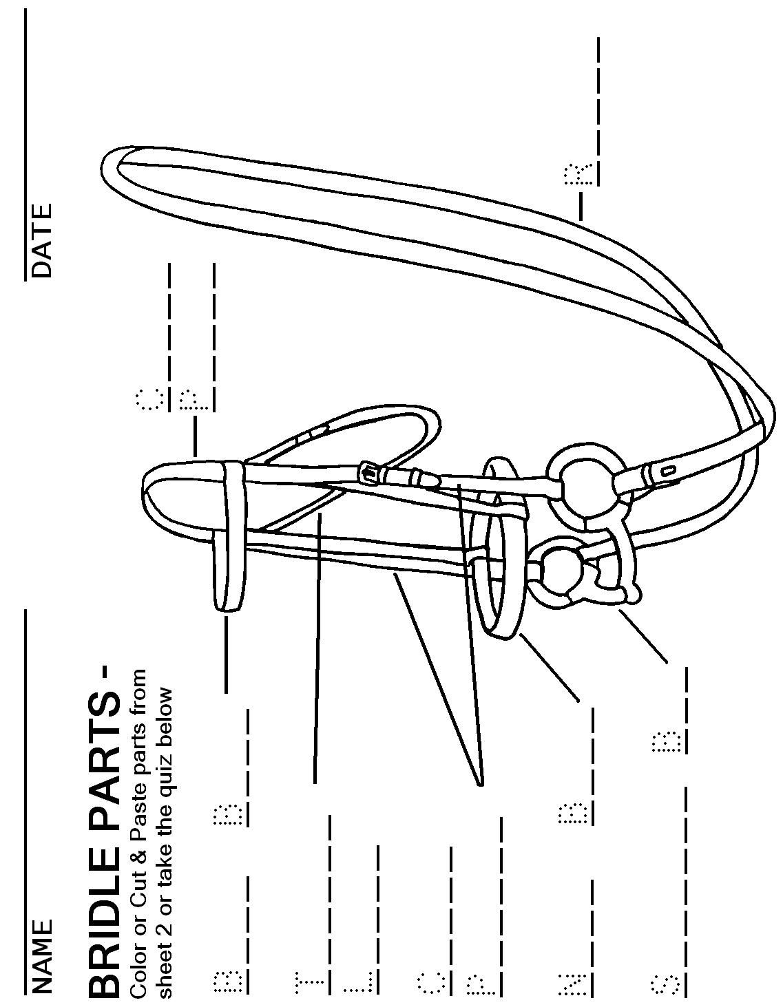 hight resolution of booklet pg 18 bridle parts fill the blanks the rest of this workbook