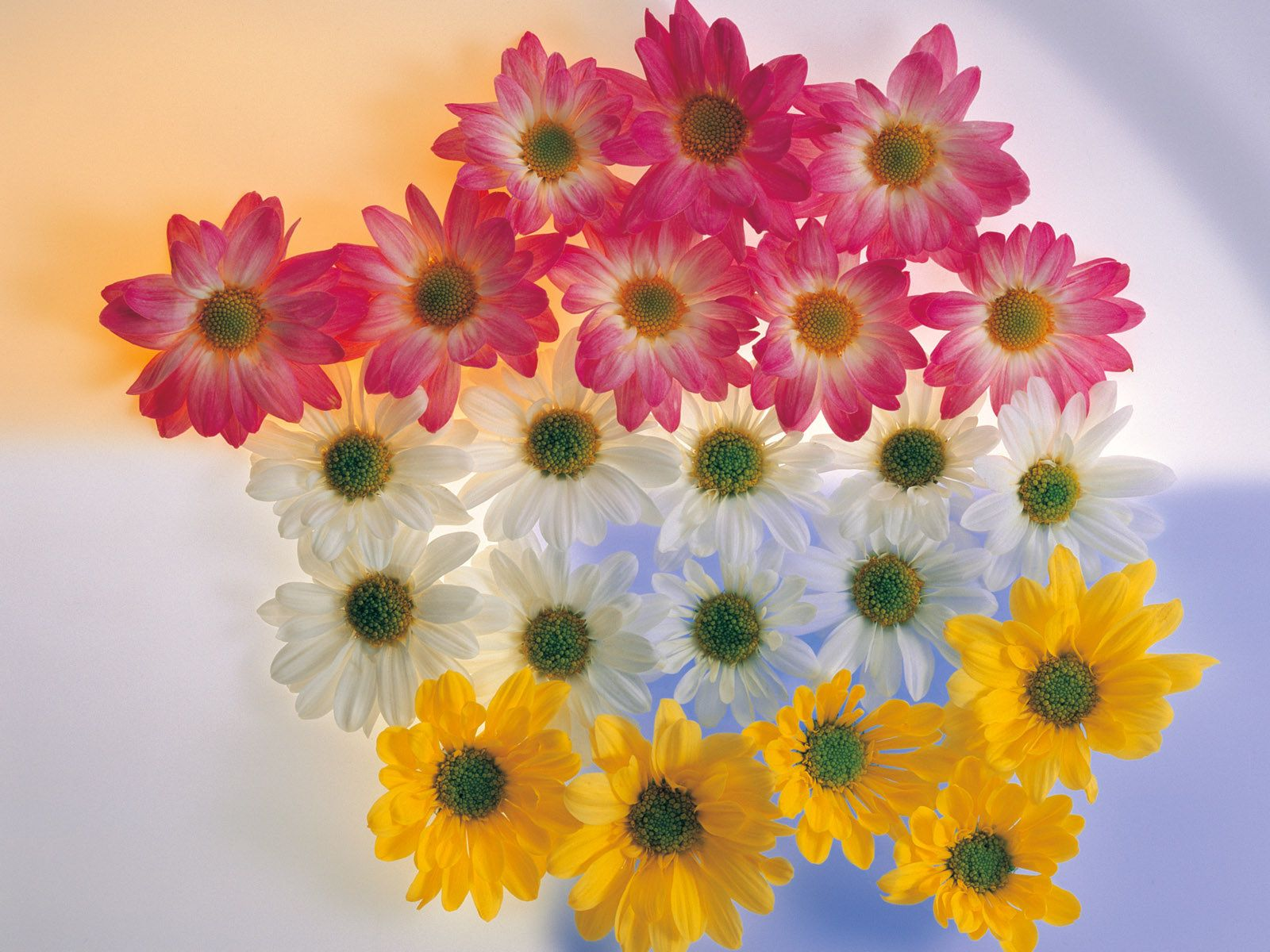 Beautiful Flowers Hd Wallpapers Beautiful Flowers Colors Wallpaper