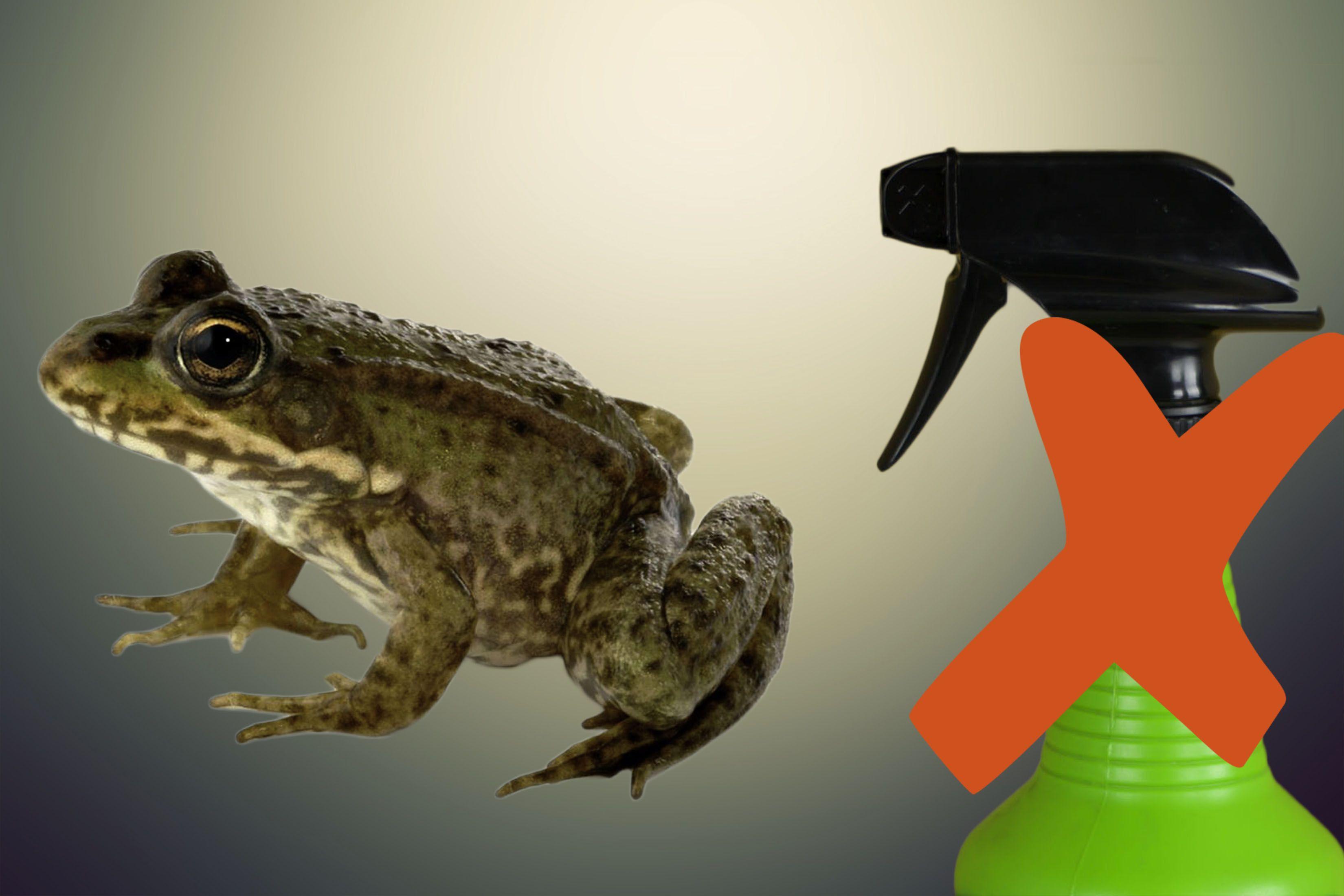 Frog Repellent