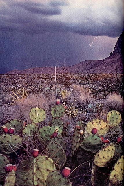 Summer storms are the best part of living in Arizona =)
