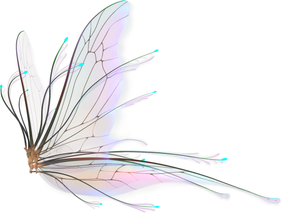 Pin By Jorge Gaston On Fairies Fairy Wings Drawing Fairy Wings Fairy Wing Tattoos