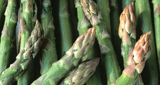 grüner spargel: so gelingt der anbau im garten | garten, Terrassen ideen