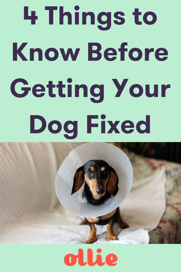 19a97e0924fa8349120c56b9ebf1c25c - How Much Does It Cost To Get Your Pet Spayed