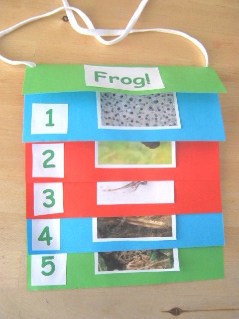 Make A Step Book Today Craft Activities For Kids Frogs