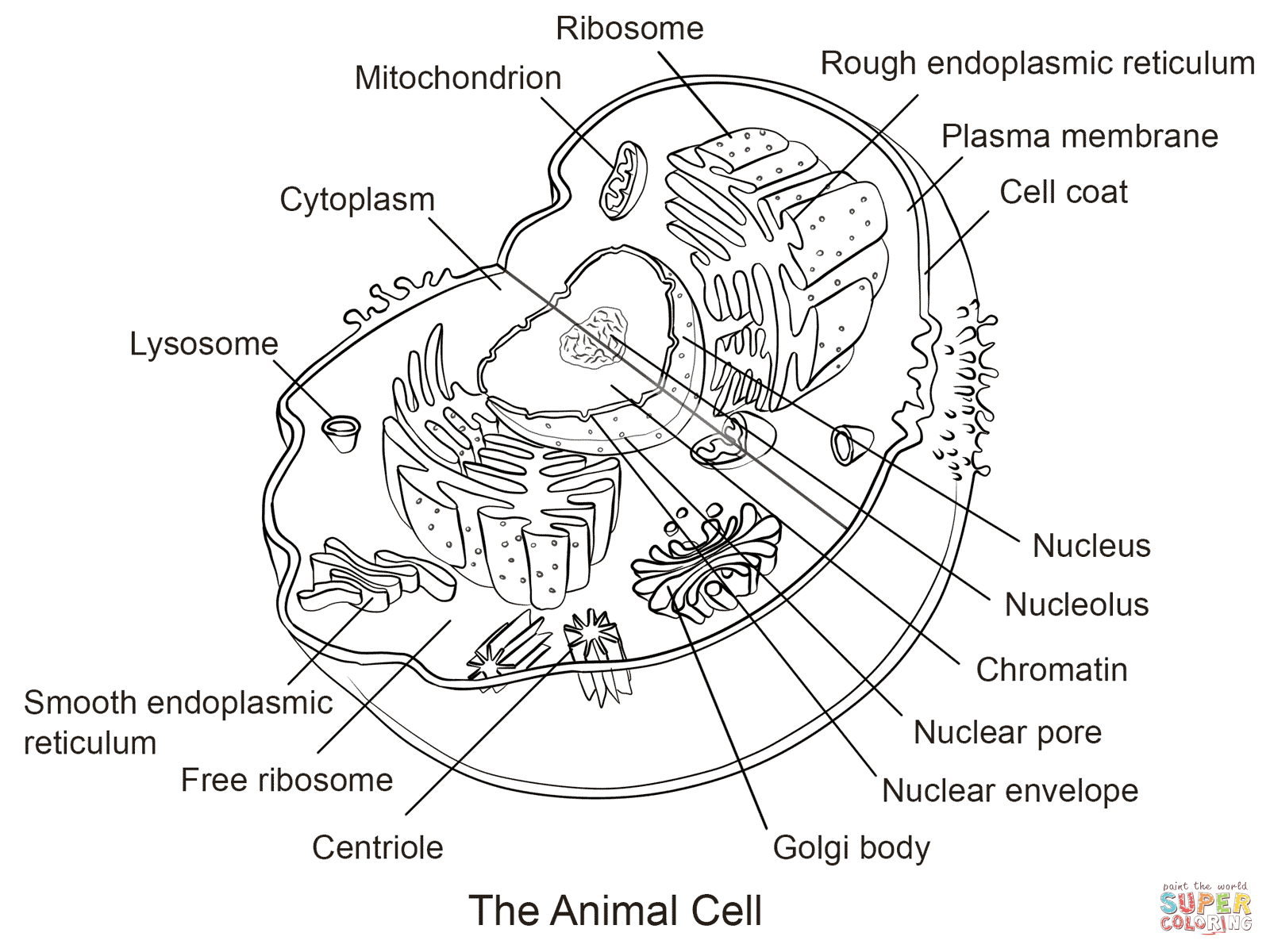 Animal Cell Coloring Page From Biology Category Select
